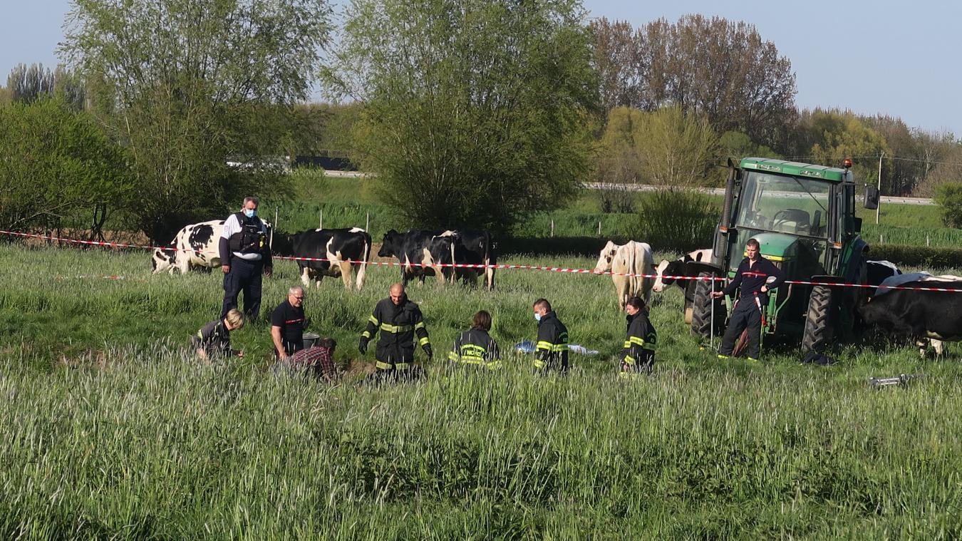 hazebrouck-:-les-pompiers-sauvent-une-vache-envasee-dans-une-pature