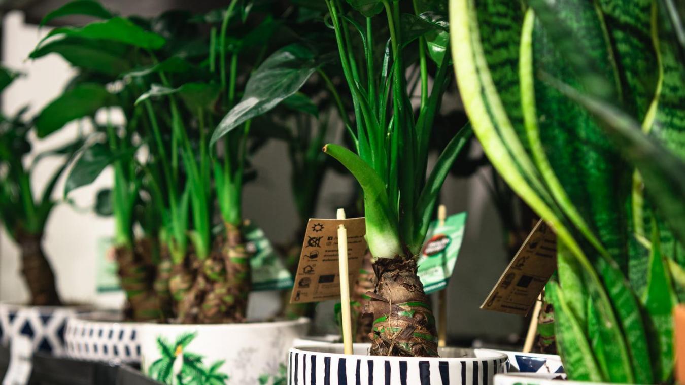 coquelles-:-grande-vente-de-plantes-a-cite-europe-de-jeudi-a-samedi
