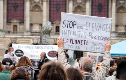 une-manifestation-contre-l'elevage-intensif-reunit-300-participants-en-centre-ville-de-lille