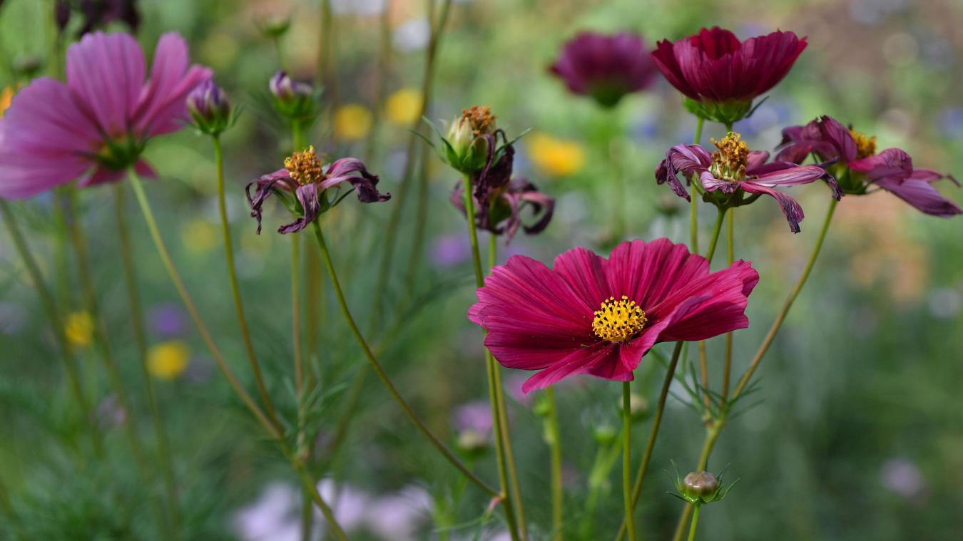 dunkerque-et-alentours:-«bienvenue-dans-mon-jardin-au-naturel»,-ce-week-end