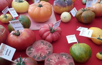 haverskerque-:-la-fete-de-la-tomate-annulee-pour-la-deuxieme-fois