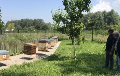 les-premiers-pots-de-miel-«made-in-loon-page»-sont-arrives-au-rucher-pedagogique!